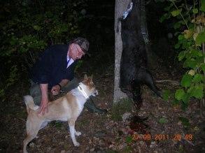 Vildsvinsjakt Kennet med hunden Fia