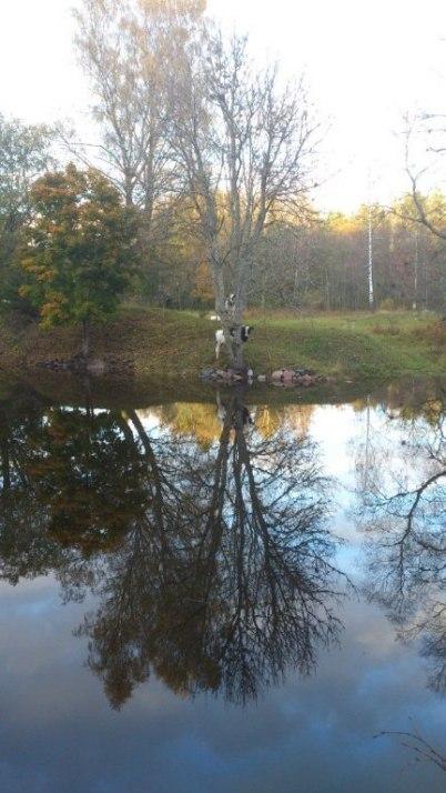 Oktober: Fotograferad av Anita Paues vid Väddö kanal