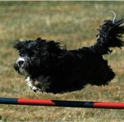 Trixie hoppar!