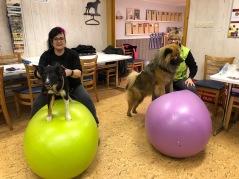 Hundarna Allie och Tessa