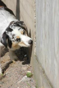 Kiwi söker utomhus