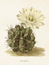 Poster Kaktus, Sköna ting