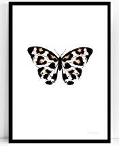 .Poster - Atelje Epifor (Panthera Pardus)
