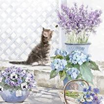 Ambiente Servetter - Kitten