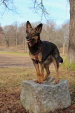 Jessie balanserar på en sten!