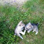 Systrar som bråkar