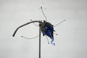 Blomsterknopp - Blomsterknopp färg blå