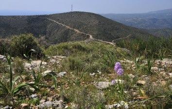 Vy från Chios med Orchis italica