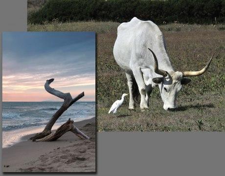 """Typiska vyer från Monti dell'Uccellini, Långhornad boskap som än idag vaktas av Maremmas """"cowboys"""", samt halft begravt drivved på stranden vid Marina de Albarese."""