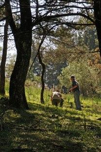 Gles skogsmiljö på berget Profitis Ilias