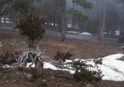 Långt in i mars ligger snöfläckar kvar på Troodos topp.