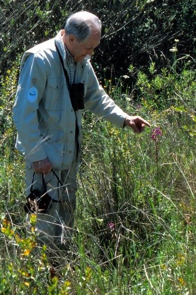 Bertil Hjortvall med ett jätteexemplar av A. laxiflora. Kreta 2001-04-17