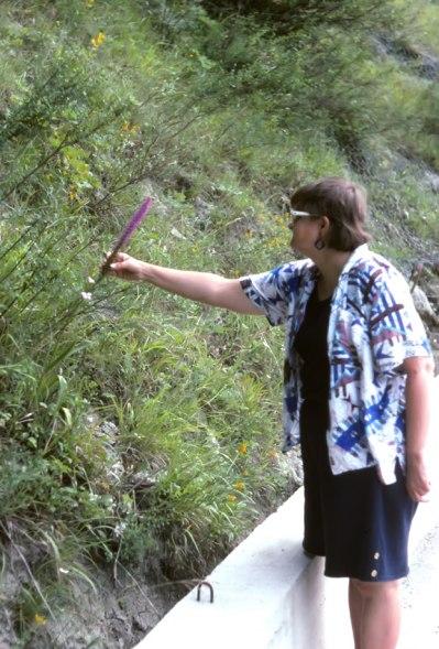G. conopsea subsp. densiflora, Emilie Romagna, Italia, juli 1996