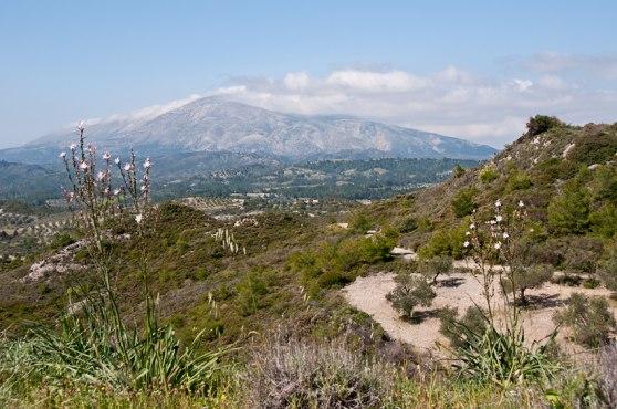 Berget Attaviros som givit namn till O. attaviria, Rhodos, 2011-04-05
