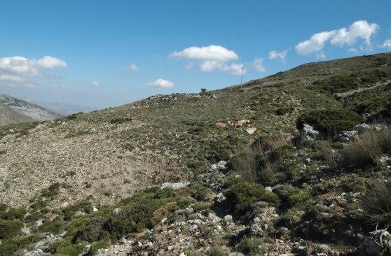 Miljö för O. cretensis från berget Thripti, östra Kreta, 2007-04-18
