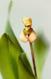 Maxillaria picta I