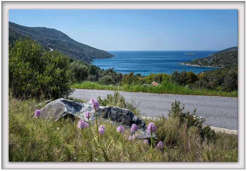 Borstnycklar, Orchis italica, Samos 2015-04-17