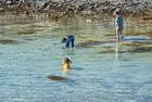 Jakt på snäckor på grunt vatten