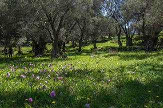 Olivlunden gav, med sin grönska och alla orkidéer, ett paradisiskt intryck