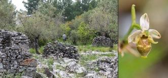 Stenig miljö på Plati. T. hö. det enda exemplar vi såg av Ophrys oestrifera