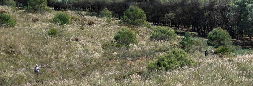 Gräsmarker vid lokal 2