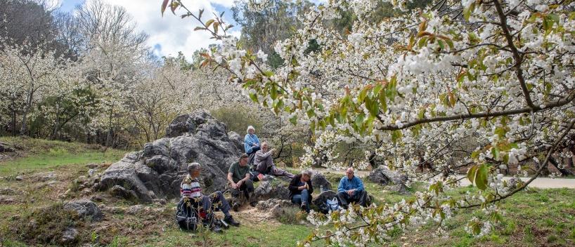 Lunch break in cherry grove at Refugio De Juanar