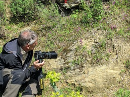 Studerar Orchis sezikiana på Lesbos.                   Foto: Ann-Mari Edvinsen