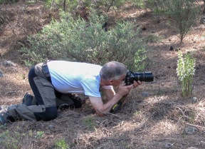 Photographing Chepalanthera epipactoides at Lesvos