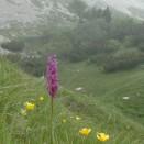 Alperna2004-06-23_0035