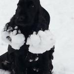 Mina öron gör spår i snön där jag går. Det är långt till vår!
