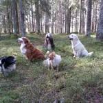 Vi måste sätta oss och vila ibland ... Milo, Ville, Runar, Geja, Emma.