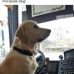 Emma som hundförare