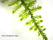 Mini Christmas moss1