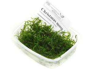Christmas moss - Christmas moss,  PerfectAqua 1 dl