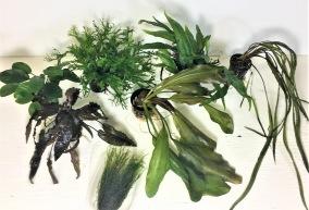 Växtpaket, lätta - Växtpaket, 7 Lätta