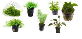 Växtpaket, nano - Växtpaket, nano