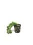 Växtpaket lätt 7vxtr