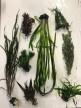 Växtpaket åtta växter.