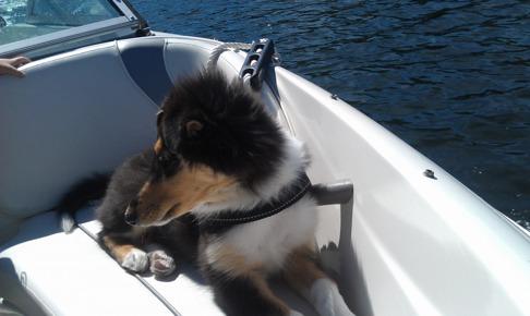 Joy skeppshund