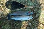 120331 Fina fiskar