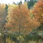 121021 Höstfärger vid Tollerupsjön