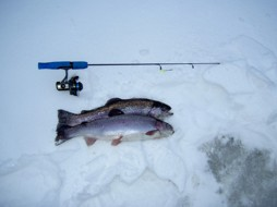 Tollerup isfiske 2010-01-16