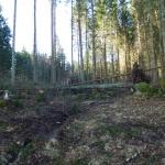 Stormen i höstas gick hårt åt skogen