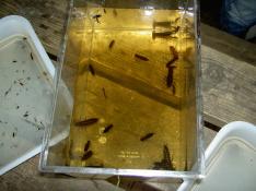 070923 Insektskurs i Tollerup