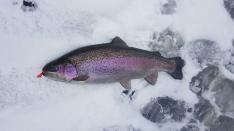 180303 Isfiske i Tollerup
