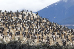 Bird life at Beagle Channel, Ushuaia