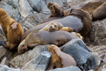 Sea lions at Beagle Channel, Ushuaia