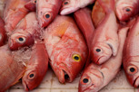 Fish at the local market at Marigot, Saint Martin