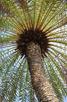 Palm, Curacao