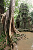 Banyan tree, Ta Prohm